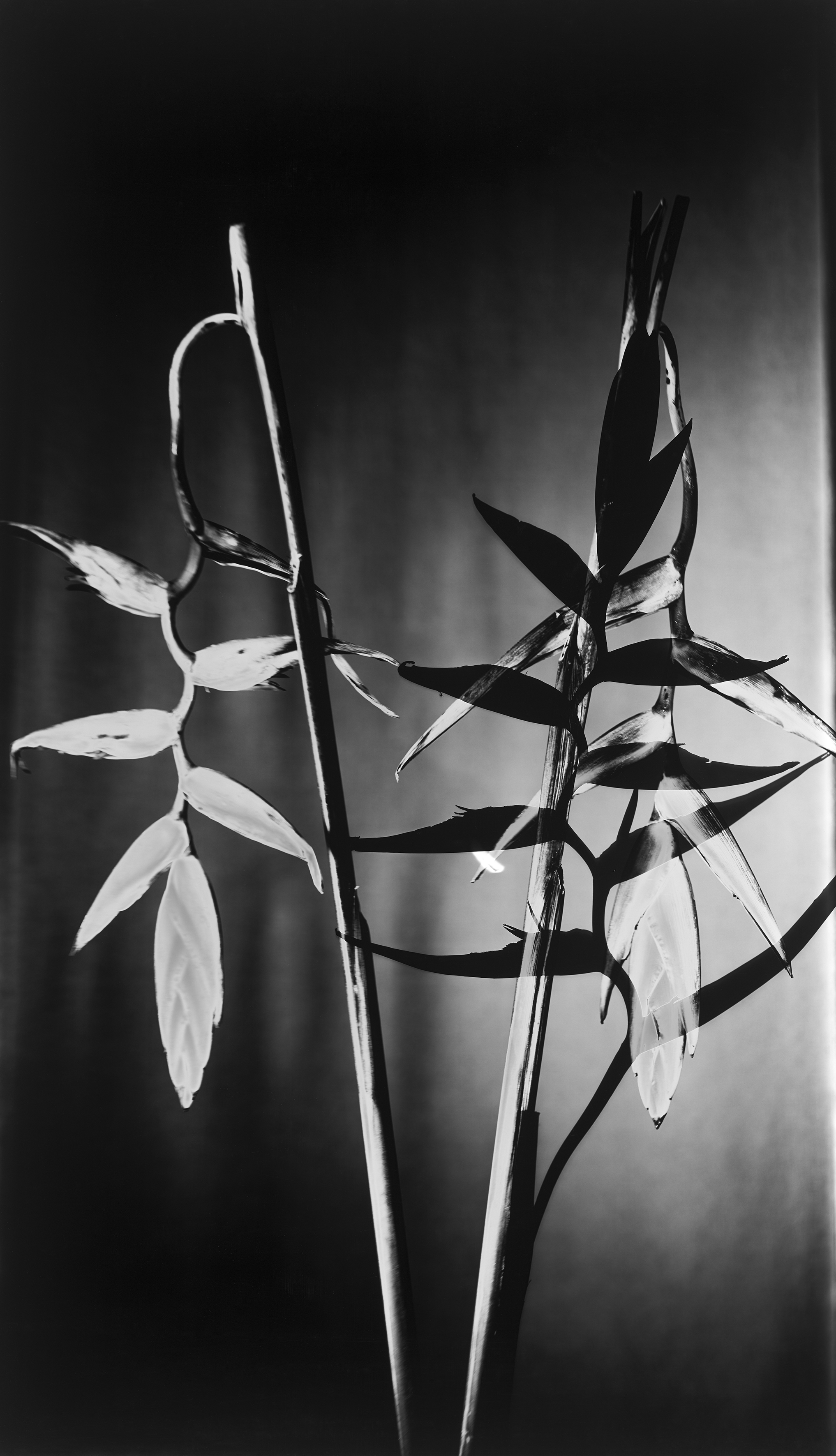 Papageienblumen-62x108-cm
